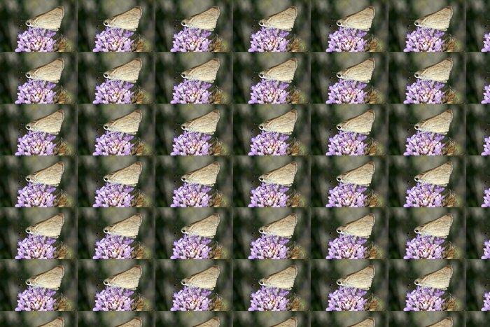 Vinylová Tapeta Motýl na květině - Ostatní Ostatní