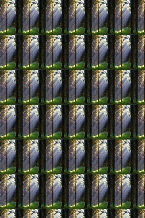 Vinylová Tapeta Sluneční paprsky v tajemné lesy - Ekologie