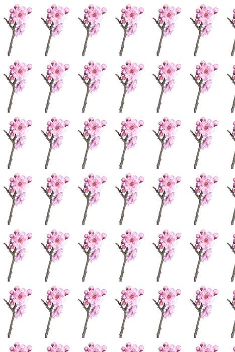 Vinylová Tapeta Krásné růžové třešňový květ izolovaných na bílém pozadí. - Roční období
