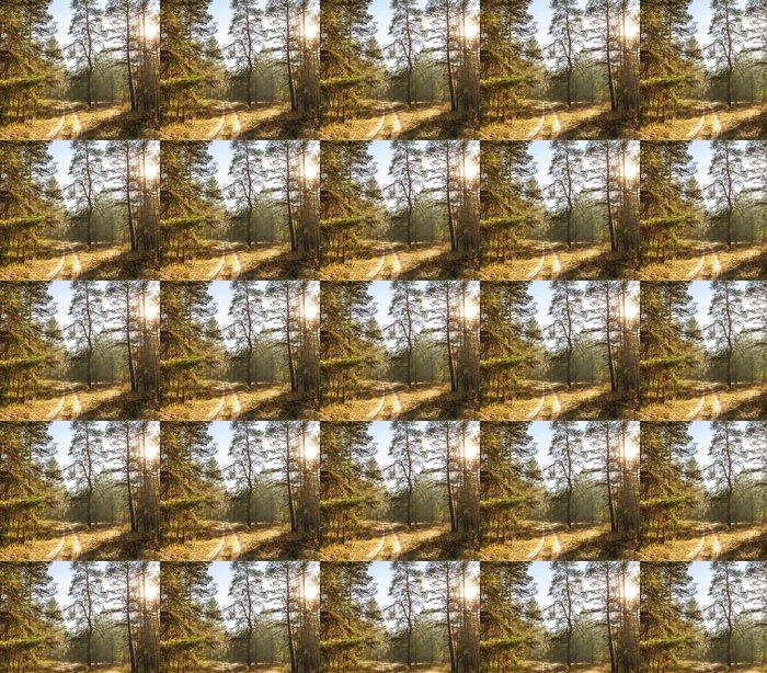 Vinylová Tapeta Podzimní les - Roční období