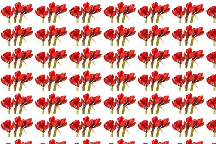 Vinylová Tapeta Červená Amaryllis květiny - Květiny