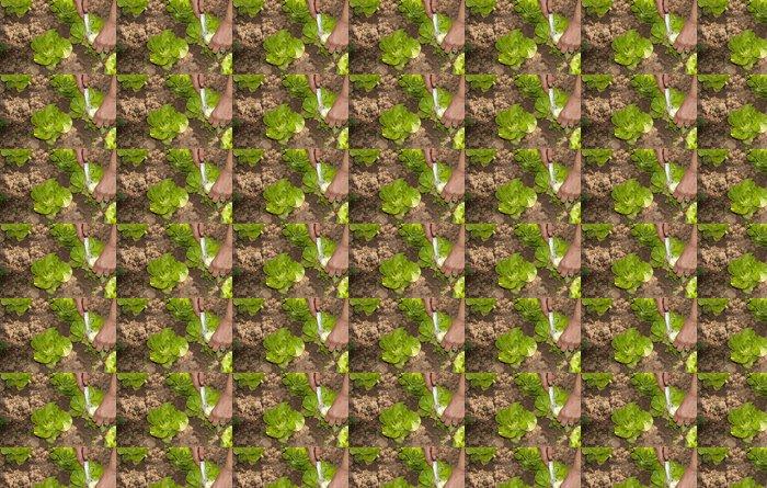 Vinylová Tapeta Zelený salát - Rostliny