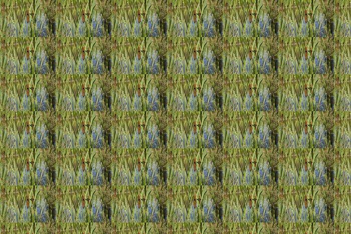 Vinylová Tapeta Marsh trávy - Evropa