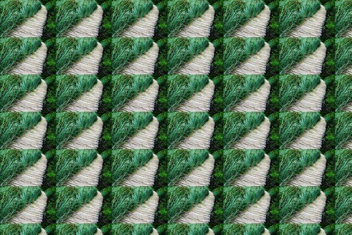 Vinylová Tapeta Cesta a rákosí - Přírodní krásy