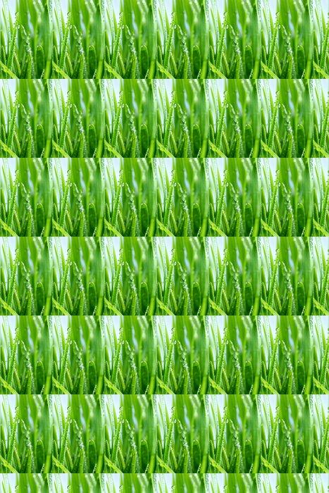 Vinylová Tapeta Kapka rosy na zelené trávě - Roční období