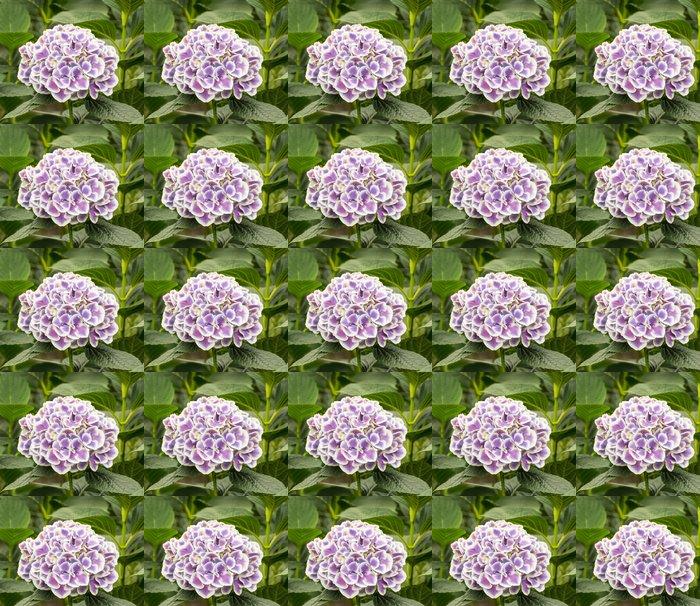 Vinylová Tapeta Detailní záběr na bílé a fialové pnoucí květiny v hortenzie nu - Květiny