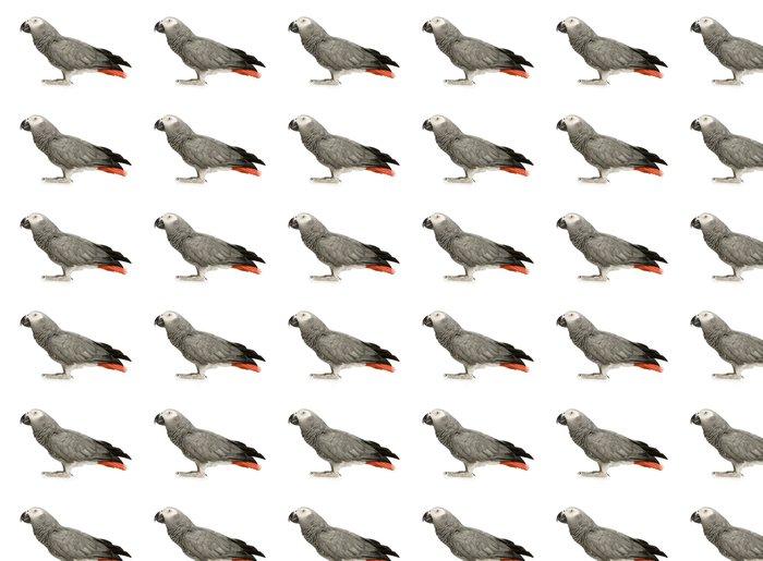 Vinylová Tapeta Papoušek šedý před bílým pozadím - Nálepka na stěny