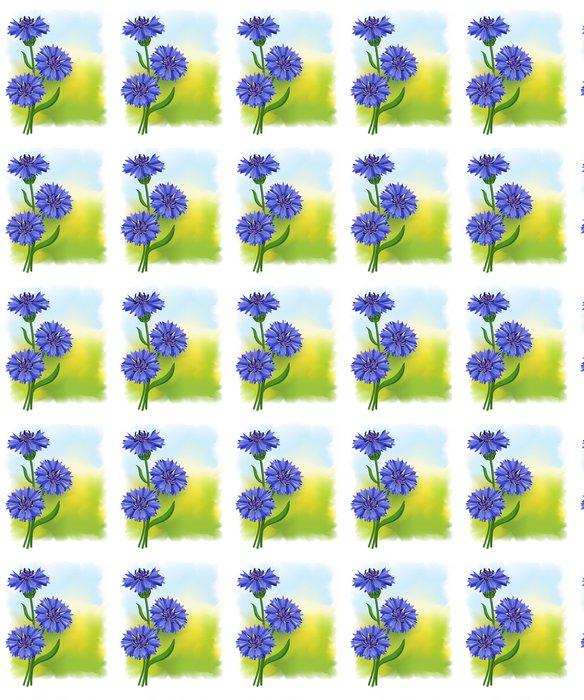 Vinylová Tapeta Květiny modrá chrpa (Centaurea cyanus). Vektorové ilustrace. - Květiny