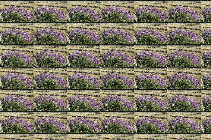 Vinylová Tapeta Květy levandule - Domov a zahrada