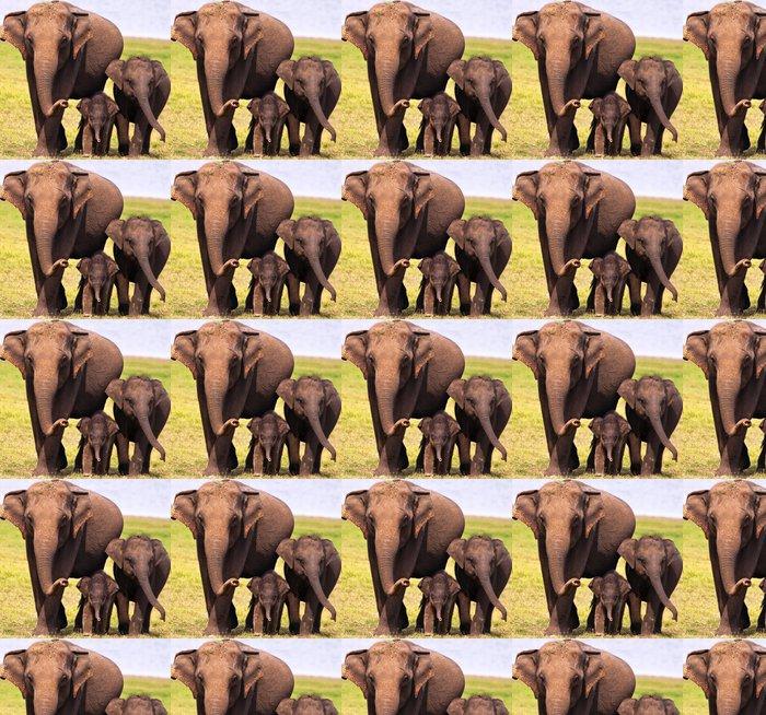Vinylová Tapeta Tři sloni - Témata