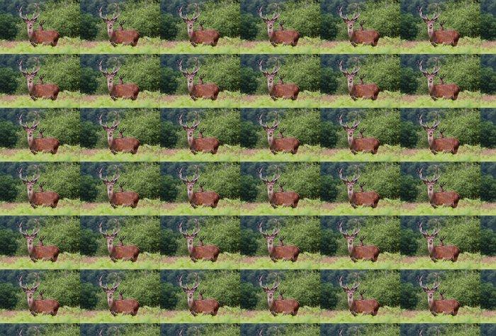 Vinylová Tapeta Red Stag Deer v anglickém parku - Témata