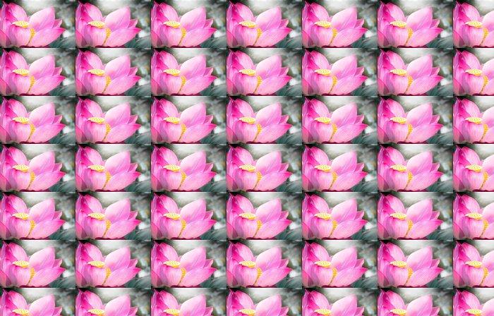 Vinylová Tapeta Pink lotus - Rostliny