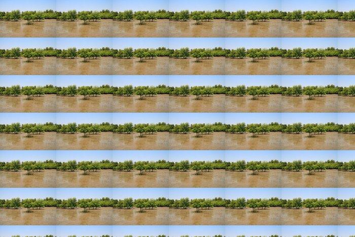 Vinylová Tapeta Mangrovových lesů - Lesy