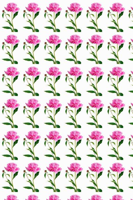 Vinylová Tapeta Růžová pivoňka na bílém pozadí - Květiny