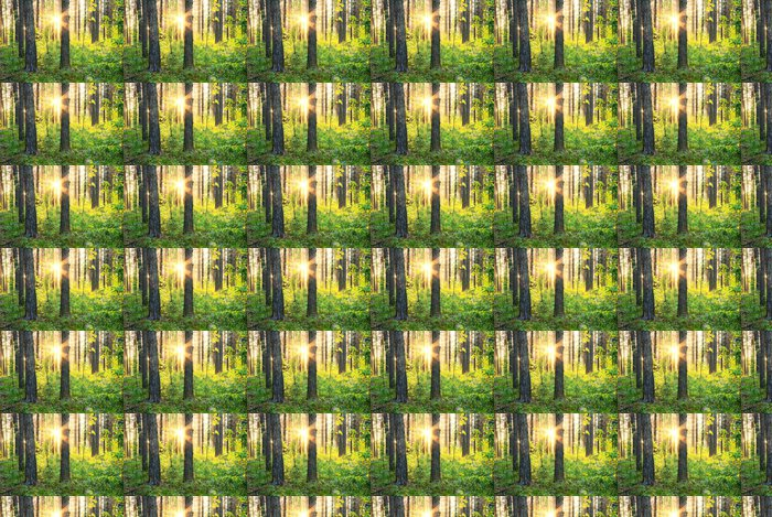 Vinylová Tapeta V lesích. - Lesy