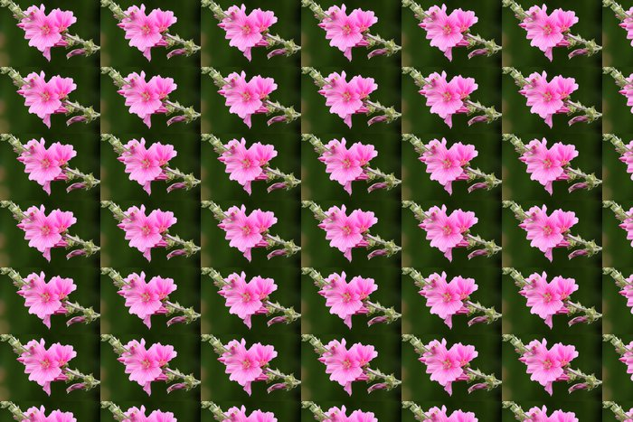 Vinylová Tapeta Lavatère arbustive - Květiny