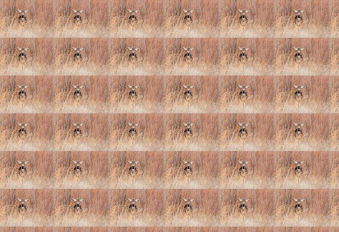 Vinylová Tapeta Mule jelen laň v poli - Savci