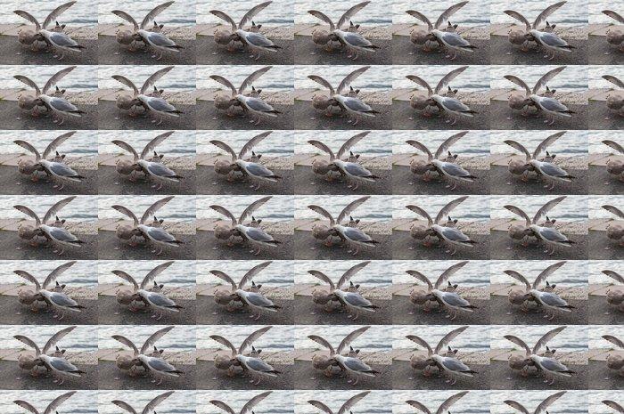 Vinylová Tapeta Gull krmení - Ptáci