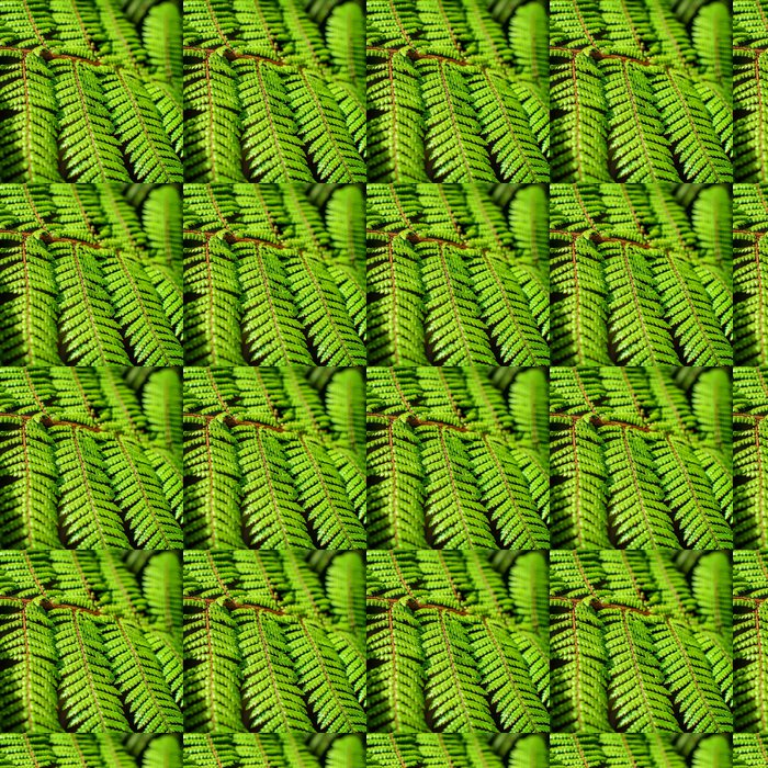 Vinylová Tapeta Detail krásné list Fern zblízka - Rostliny