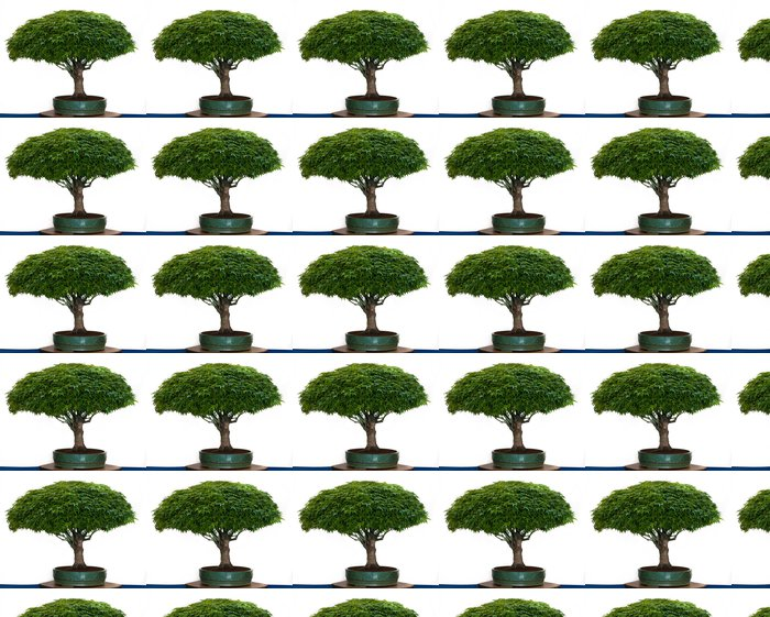 Vinylová Tapeta Acer palmatum Kiyohime als Bonsai - Stromy
