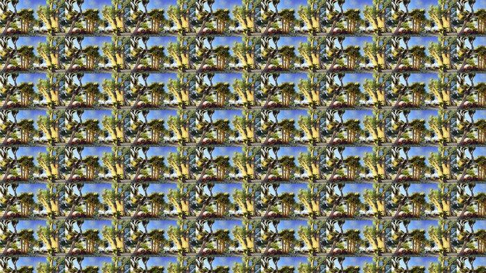 Vinylová Tapeta Africké baobaby - Témata