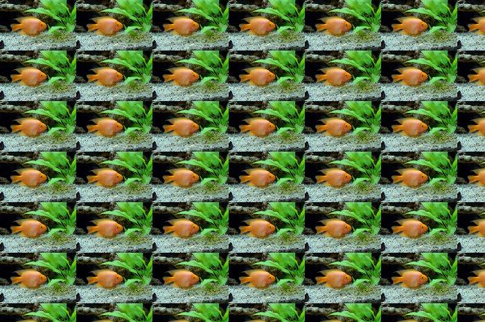 Vinylová Tapeta Vodnář malé ryby Red papoušek - Vodní a mořský život