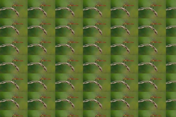 Vinylová Tapeta Sympetrum depressiusculum, Maschio - Ostatní Ostatní