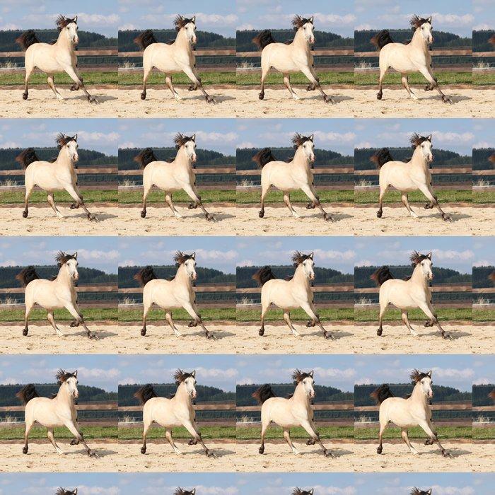 Vinylová Tapeta Krásná palomino koně běží - Savci