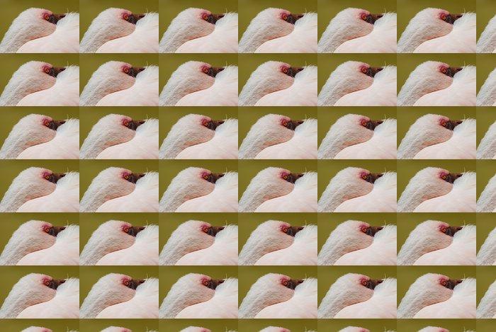 Vinylová Tapeta Pink flamingo - Ptáci