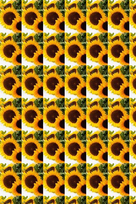 Vinylová Tapeta Slunečnice izolovaných na bílém pozadí - Témata