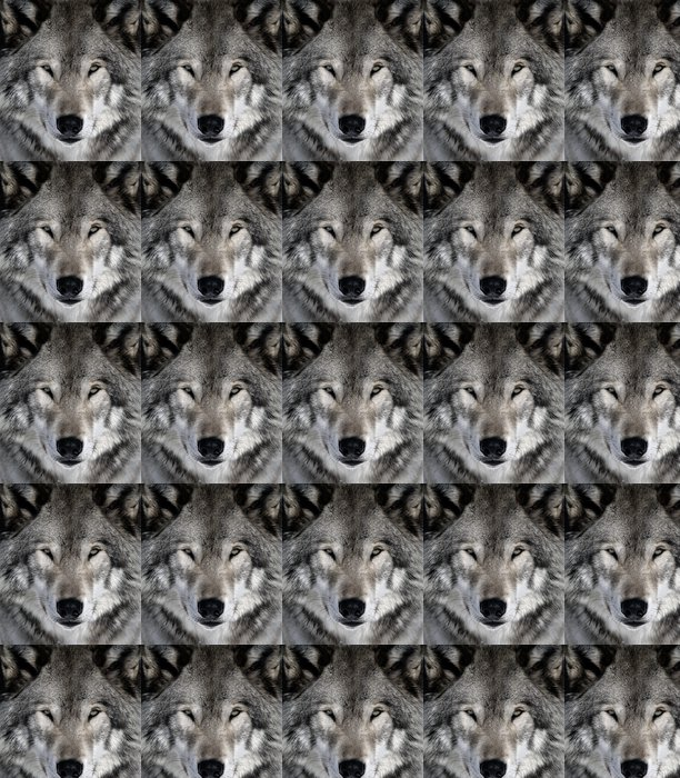 Vinylová Tapeta Gray Wolf -