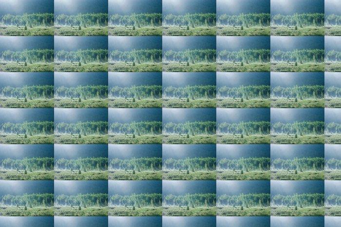 Vinylová Tapeta Horský les na začátku léta ranní rosa - Hory
