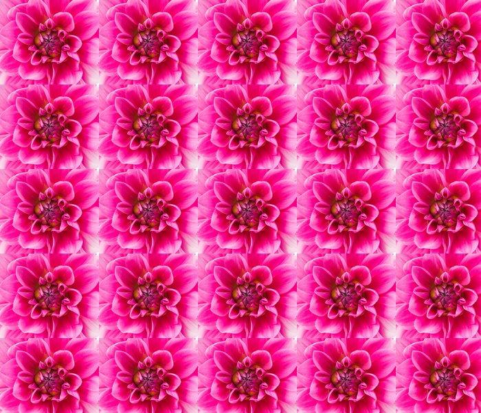 Vinylová Tapeta Pink Dahlia izolovaných - Květiny
