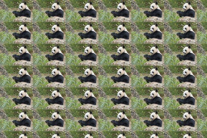Vinylová Tapeta Obří panda při jídle bambusu - Témata