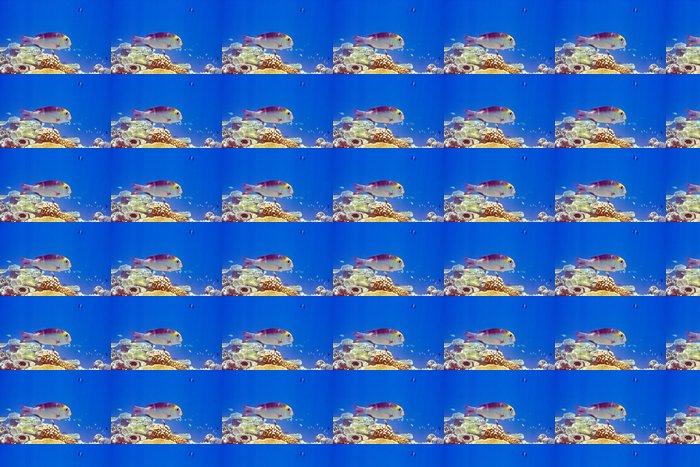 Vinylová Tapeta Indický oceán. Ryby. Ve korálů. - Témata