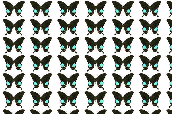 Vinylová Tapeta Druhů motýlů Papilio Karna Karna - Ostatní Ostatní