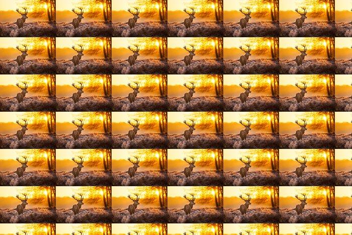 Vinylová Tapeta Red Deer v ranní Slunce. - Témata