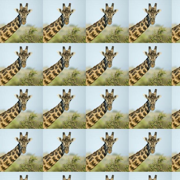 Vinylová Tapeta Close-up portrét žirafa, Serengeti Národní park Serengeti - Témata