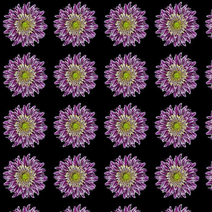 Vinylová Tapeta Purple Chrysanthemum Flower izolovaných na bílém - Květiny