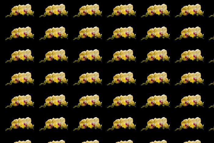 Vinylová Tapeta Žlutá orchidej izolovaných na černém pozadí - Témata