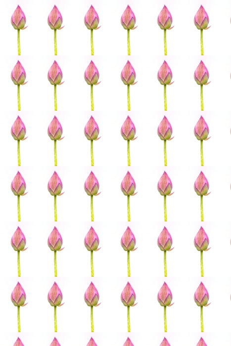 Vinylová Tapeta Lotus na bílém pozadí - Květiny