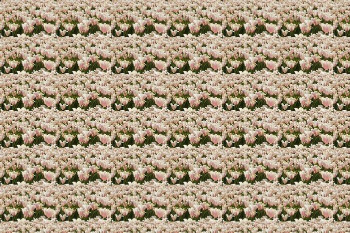 Vinylová Tapeta Bílo-růžové tulipány - Květiny