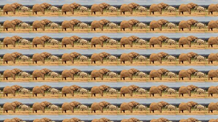 Vinylová Tapeta Elephant Bull Pití - Témata
