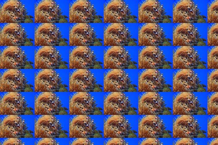 Vinylová Tapeta Clownfish - Voda