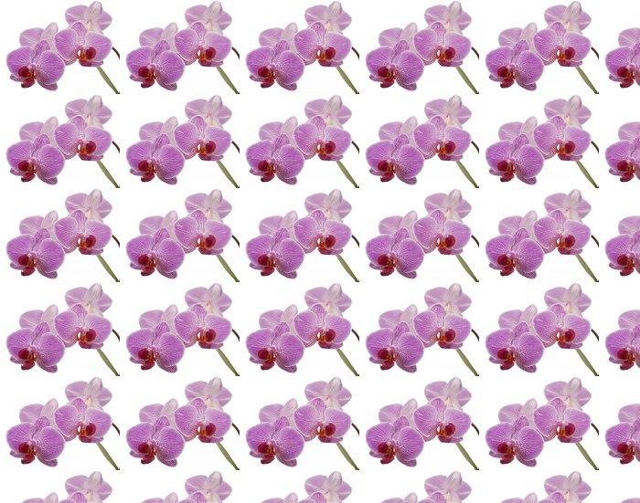 Vinylová Tapeta Phalaenopsis orchidej - Nálepka na stěny