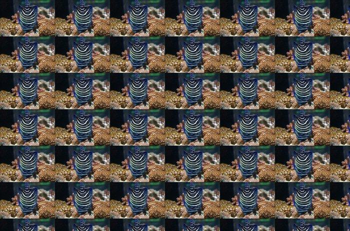Vinil Duvar Kağıdı Poisson ange bleu - Sualtı hayvanları