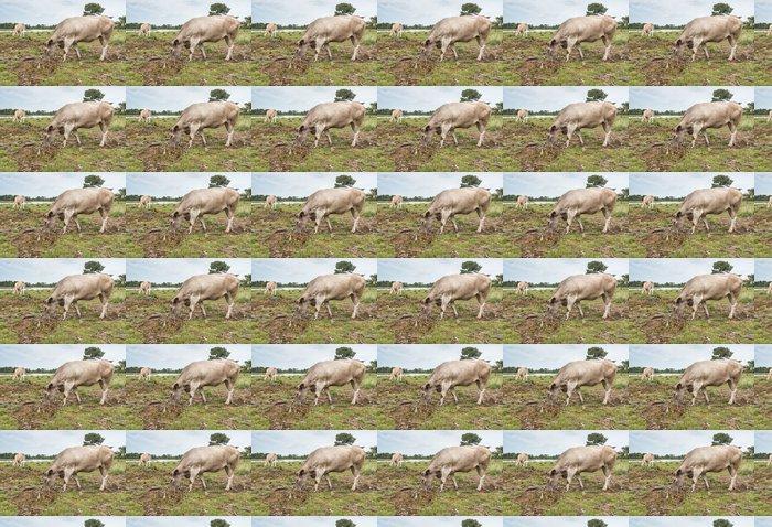 Vinylová Tapeta Grey krávy pasoucí se na holé přírodní rezervace - Roční období
