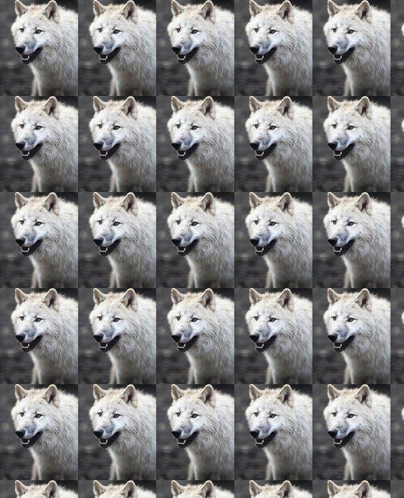 Vinylová Tapeta Arktický vlk (Canis lupus arctos) aka Polar Vlk nebo White Wolf - Témata
