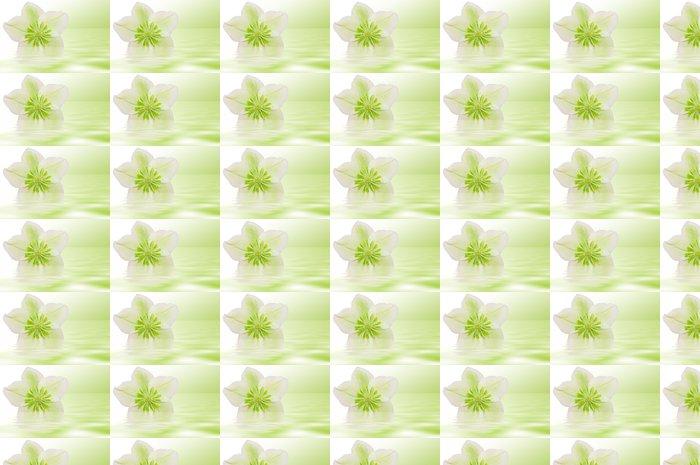 Vinylová Tapeta Heilende Christrose - Květiny