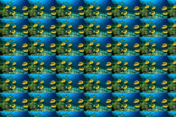 Vinylová Tapeta Hejna ryb: Butterflyfish na korálovém útesu - Vodní a mořský život